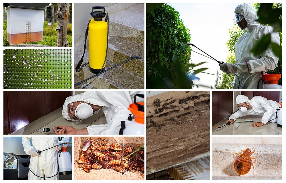 Pest Control Collage