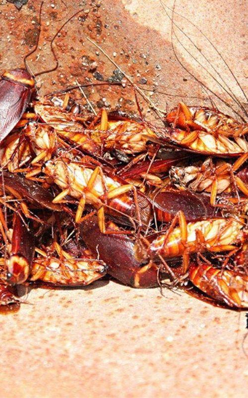 Pest Control Services Image