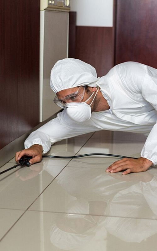 residential pest services image