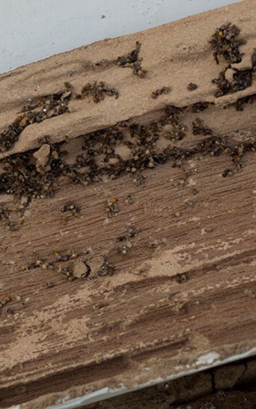 Termite services image
